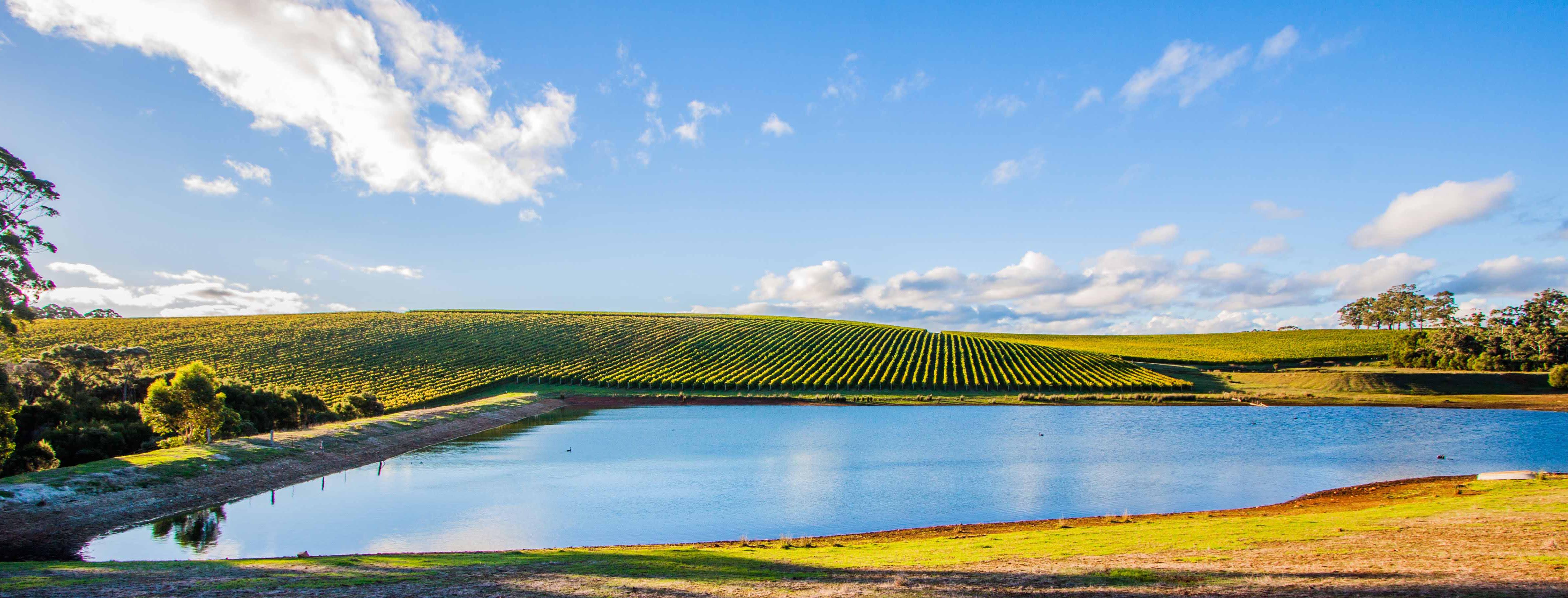 s3-vineyard